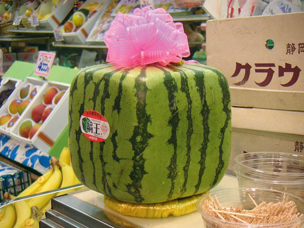 Medium nn square watermelon via wikicommons