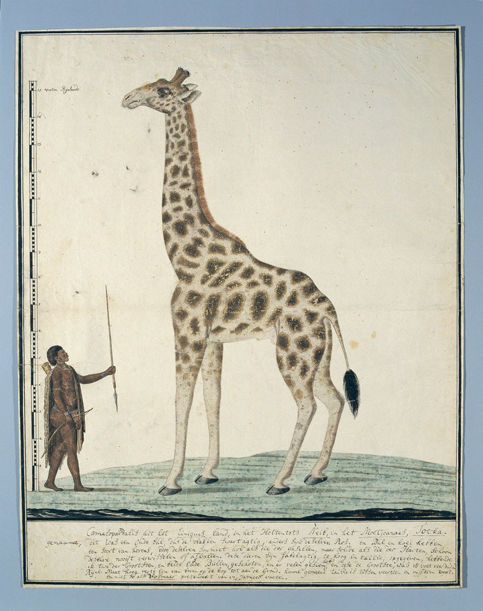Small robert jacob gordon  een giraffe met een khoi  1779