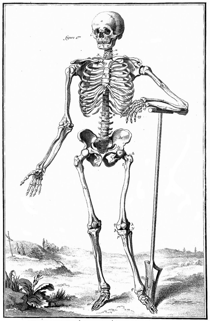 Small standing skeleton from diderot s encyclopedie wellcome l0018903